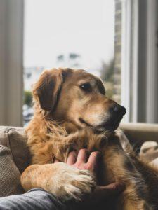 Pochówek zwierząt - o czym każdy właściciel musi pamiętać